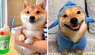 В Японии живет песик с самой очаровательной улыбкой в мире!