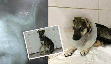 Хозяева выгнали щенка их дому после того, как он сломал лапу