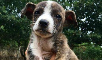 Волонтеры спасли подброшенного под машину щенка. Его умоляющий взгляд не позволял поступить иначе
