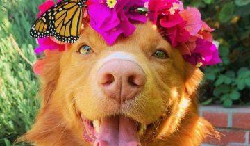 10 великолепных фото пса по кличке Майло, лучшие друзья которого — бабочки