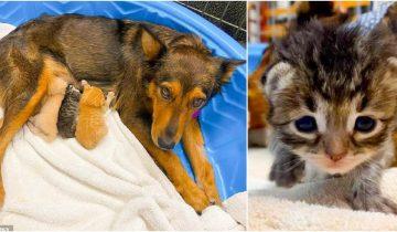 Материнский инстинкт: собака решила выкормить осиротевших котят