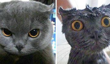 Домашние животные до и после купания. На некоторых без улыбки не взглянешь