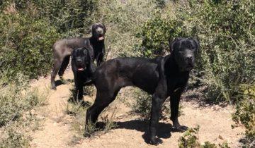 Собаки потерялись в горах и одичали. Их едва успели спасли