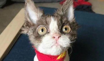 История Аппы — кошки, которую никто не хотел забирать из приюта