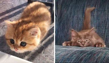 12 смешных котят, которые из засады напасть хотят! Получается пока не очень…