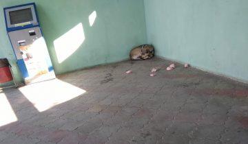 Собака, напуганная колбасой и спасенная голубями