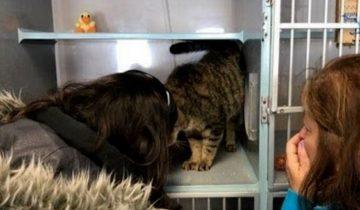 13-летнего кота семья успела оплакать, но он нашелся спустя два года