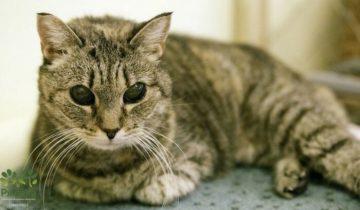 Слепая кошка прожила в приюте целых четыре года — но, в конце концов, она все же нашла дом