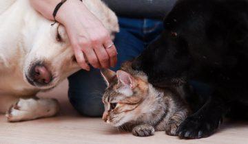 Кошка отказалась жить в новом доме без своей собаки. Редкий случай в природе