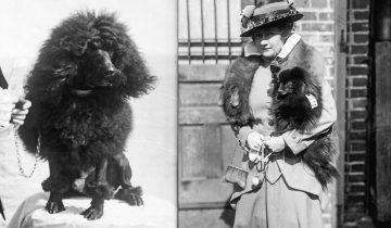 Как изменился внешний вид домашних животных за 100 лет: породы собак 1915 года