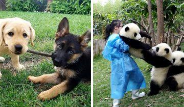 15 шикарных фото дружбы животных, которые заразят своим умилением всех вокруг
