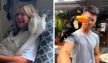 12 фото дерзких животных, которые решили показать всем, кто здесь главный