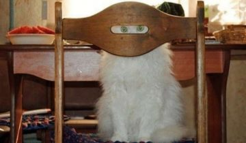 Фотографий, которые доказывают, что все коты — лучшие секретные агенты