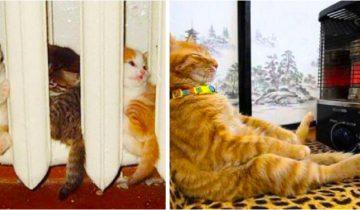 15 фото котов, которые в любой ситуации выбирают сон в тепле