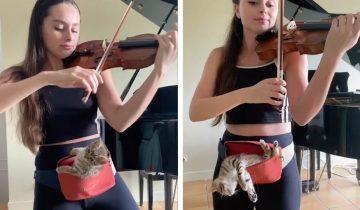 Видео с девушкой, играющей на скрипке для котика, восхитило весь Интернет