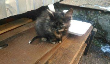 Девушка пожалела котёнка с подкожным клещом и решила его спасать, рискуя заразить своих котов