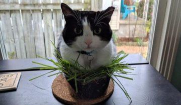 Кот или цветок? Да это же кот в цветке!