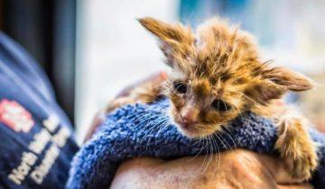 Как котёнка, похожего на Малыша Йоду, спасли во время пожаров