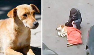 Мальчик с добрым сердцем укрыл своей курткой замерзающую собаку
