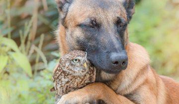 Необычная дружба между большой собакой и крошечной птичкой. Разве так бывает?