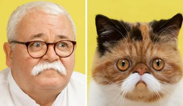 Фотограф доказал, что у кошек есть доппельгангеры среди людей. Или наоборот
