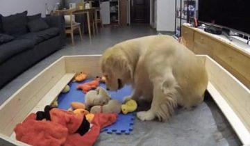 Собака, впервые ставшая мамой, трогательно заботится о своих щенках