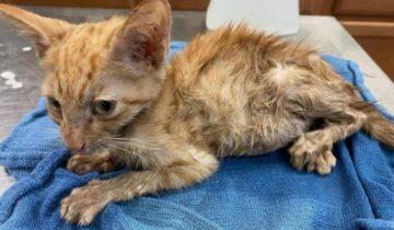 Девушка показала фото кота через месяц после спасения, и это совсем другой кот