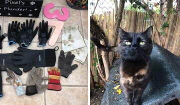 Хозяйка кошки-воровки ищет владельцев украденных вещей