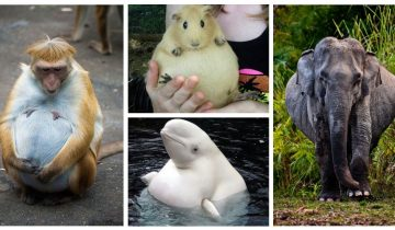11 фото на случай, если вы не знали как мило выглядят беременные зверушки