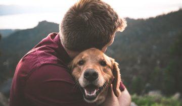 9 причуд собак, которые на самом деле абсолютно объяснимы