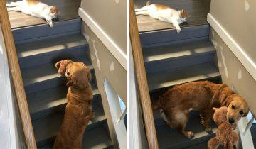 Как кошка с собакой: 12 доказательств, что дружба между котами и собаками невозможна