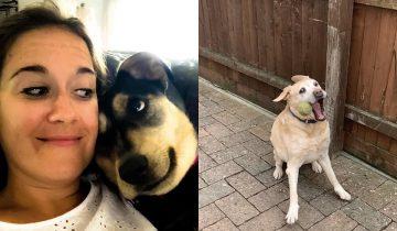 15 фото собак, которые не оставят безразличными даже кошатников