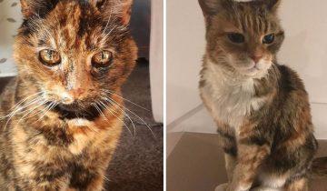 13 котиков в возрасте, которых хочется  обнять и не отпускать