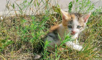 Котенок полз вдоль дороги. Когда его нашли, он рычал и боялся что снова оставят!