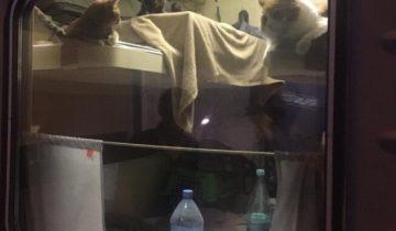 Пассажир РЖД выкупил все купе для своих любимых котов