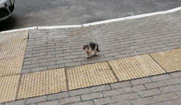 История котенка, который каждое утро бежал навстречу людям в надежде, что его полюбят