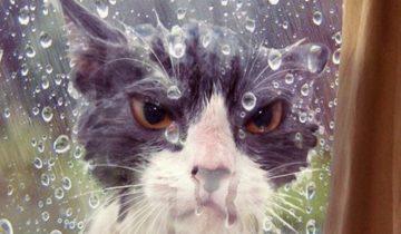 Ах, эта осень! Новая подборка смешных фото животных