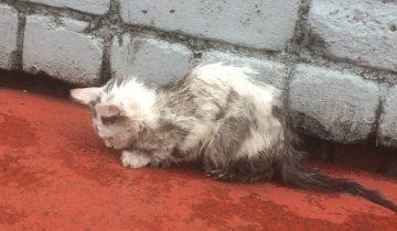 Фото чумазого котенка разлетелось по соцсетям. Многие жалели его, а помог лишь один