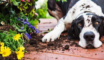 Что делают домашние животные, когда остаются одни: 10 смешных фото