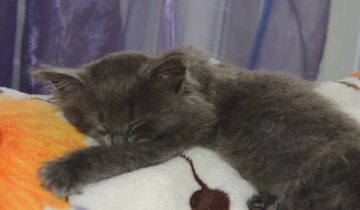 Хозяева подбросили маленького котенка в подъед дома и ушли, не оставив малышу даже хлеба