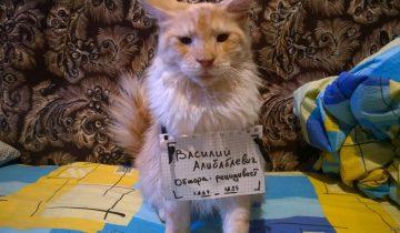 Наказать нельзя простить: коты, совершившие ужасные преступления против своих хозяев