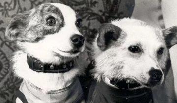 Собаки, о которых знают во всем мире