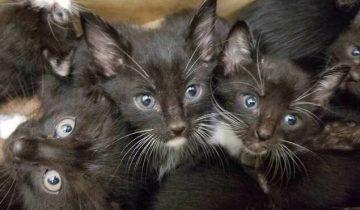 Сотрудники приюта были шокированы, когда им принесли 39 котят