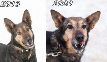 Через 7 лет. Как выглядели эти собаки щенками: фото тогда и сейчас