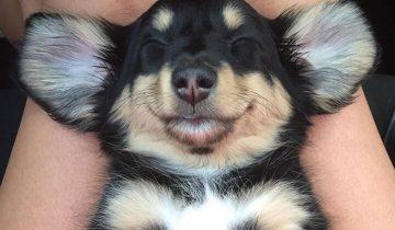 Видят ли собаки сон? 10 фотографий мило спящих песиков!