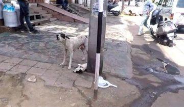 Бездомная собака отчаянно лаяла, призывая людей помочь ее щенку