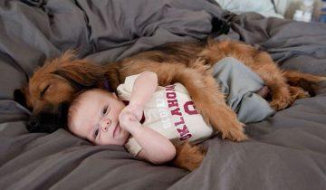 10 причин сказать «да», когда ребенок хочет завести собаку или кошку