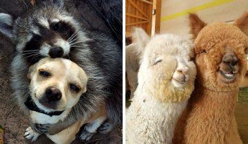 10 умилительных фото дружбы животных, глядя на которые сложно сдержать улыбку