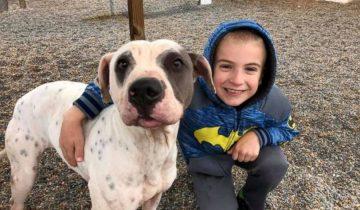 7-летний мальчик Рома спас 1300 собак, после этого его признали «Ребенком года»