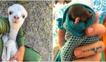Для отличного настроения: 12 милых младенцев из животного мира